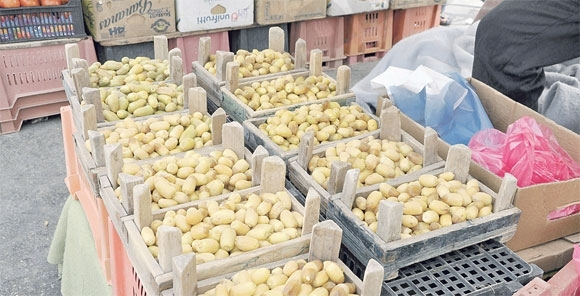 أمانة الأحساء تمنع تعبئة «الرطب» وبيعها بالصناديق الخشبية