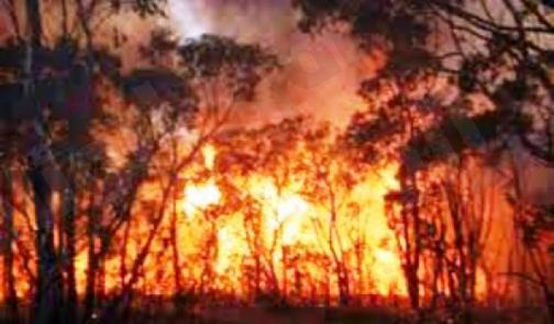 سلطات أريزونا تسيطر على «80» بالمائة من حرائق الغابات المجهولة
