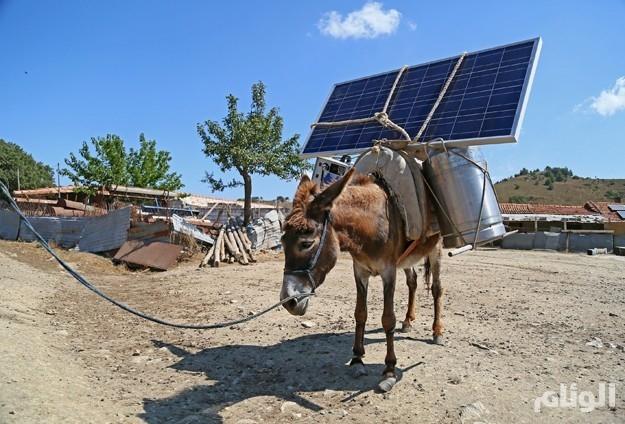 «توليد الكهرباء» على ظهور الحمير في تركيا