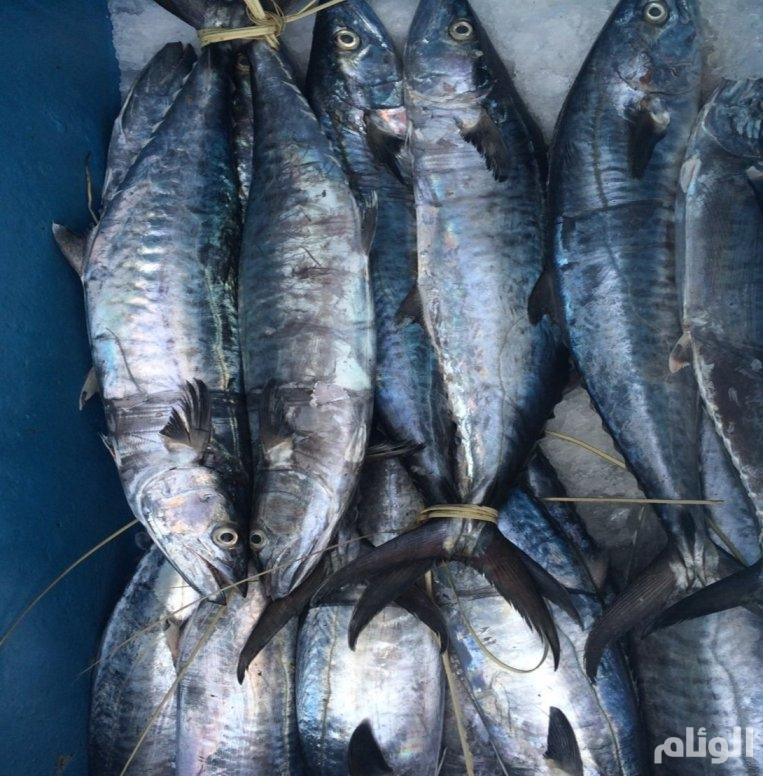 «البيئة» تحظر استيراد الأسماك الحية من جنوب أفريقيا
