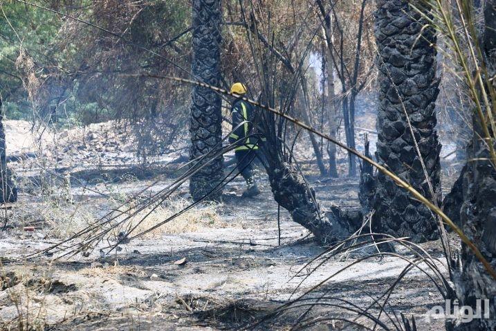 مدني مكة يسيطر على حريق «70» نخله بمزرعة العمرة