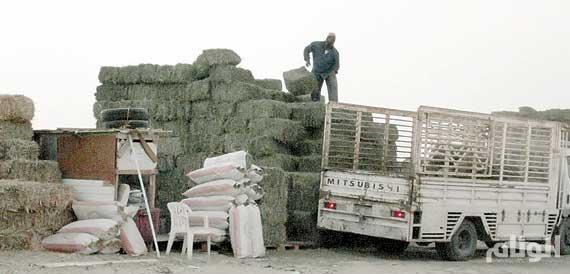 «الزراعـة»: انخفـاض استيـراد الأعـلاف الخضـراء 60 %