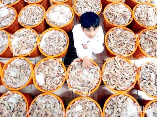 """""""البيئة"""" تعلن موعد بدء موسم صيد الروبيان في الخليج العربي"""
