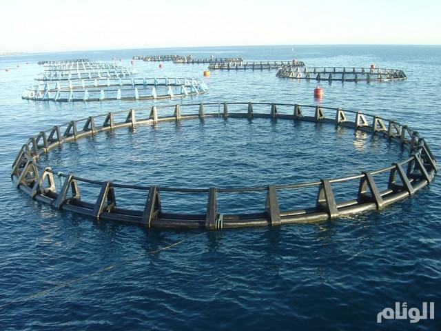 «الزراعة» تطرح 80 مشروعاً للسعوديين في الاستزراع السمكي