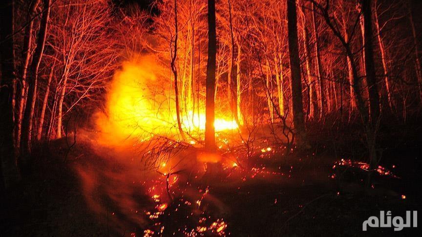 كاليفورنيا تعلن الطوارئ لمواجهة أكبر حريق غابات في تاريخ لوس أنجليس