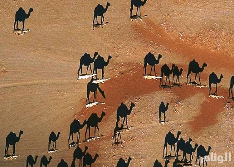 صورة التقطت في صحراء عمان تحيّر رواد مواقع التواصل
