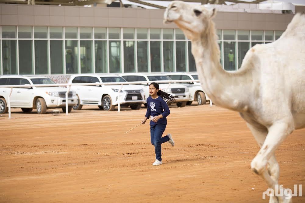 «صغرى» تركض خلف إحدى النياق المشاركة بمهرجان الملك عبد العزيز لمزاين الإبل