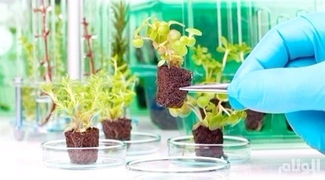 تعرف على النباتات الذكية التي طورها الجيش الأمريكي لـ«التجسس»