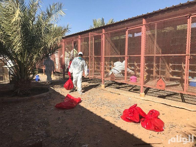 """""""البيئة"""": 4 إصابات بإنفلونز الطيور H5N8 في الرياض خلال 24 ساعة"""