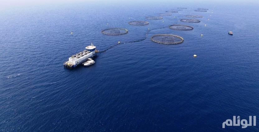 مكة المكرمة: تدشين أكبر مشاريع الاستزراع السمكي في العالم
