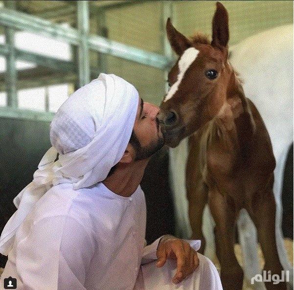 حمدان بن محمد يظهر عشقه للخيول بصورة على انستغرام