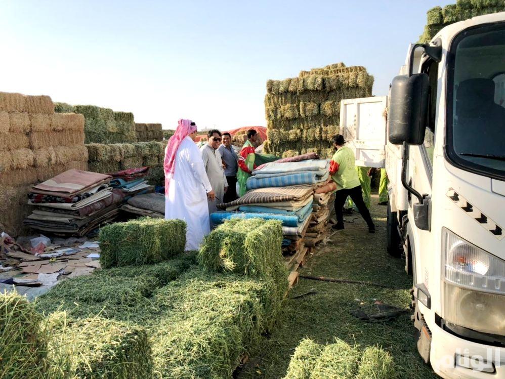شاهد: مداهمة بائعي حليب الإبل على طريق الليث مكة