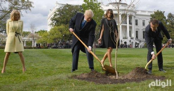 من اقتلع الشجرة التي زرعها ترامب وماكرون في البيت الأبيض ؟