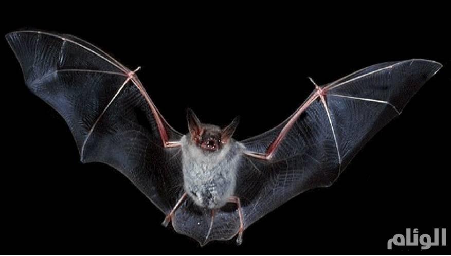حفرية تظهر أن الخفافيش موجودة منذ 33 مليون سنة