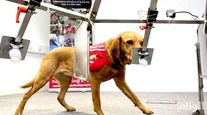 ابتكار كلب إلكتروني لإنقاذ الضحايا تحت الأنقاض