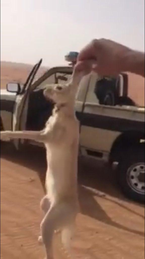"""الحياة الفطرية توضح حقيقة فيديو يظهر أشخاصا على سيارة حكومية يصطادون أرنبا"""""""