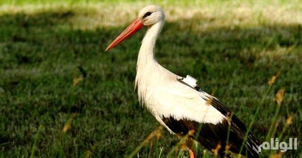 في مصر.. شخص يمسك بــ«طائر» تجارب ويكلف العلماء 2300 يورو