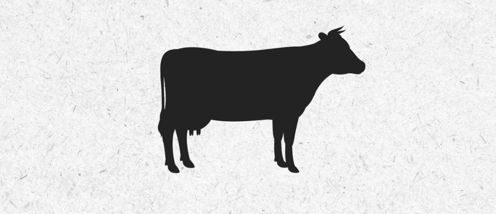 """""""البيئة"""" ترفع الحظر عن """"الأبقار البرازيلية"""""""