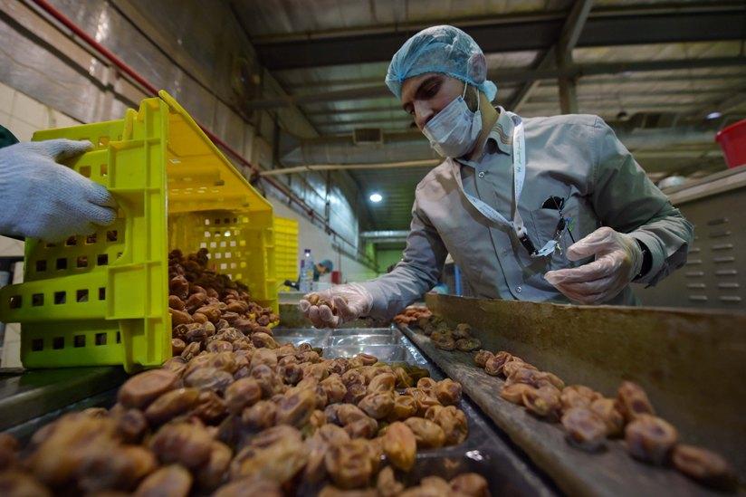 الغذاء والدواء: خلو منتجات تمور المدينة من بقايا المبيدات