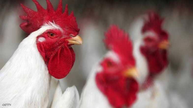 إغلاق أسواق الطيور بمدينة بريدة ومحافظات منطقة القصيم لهذا السبب