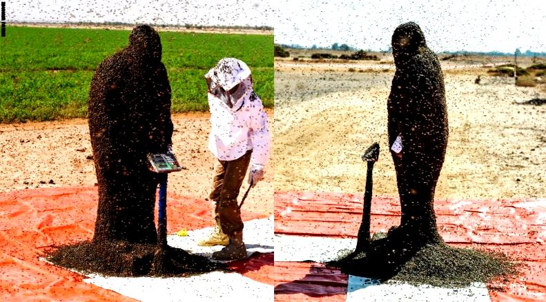 سعودي يغطي رأسه وجسمه بعباءة من النحل