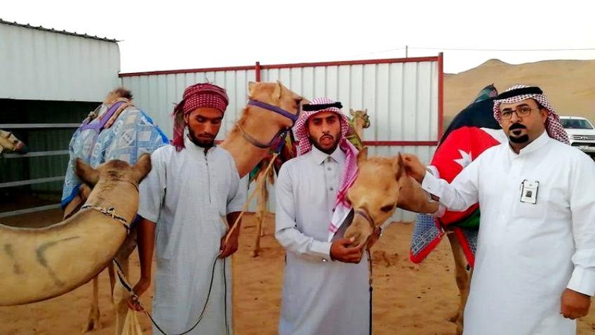 بالصور: توافد «الهجن الأردنية» للمشاركة بختامي مهرجان ولي العهد