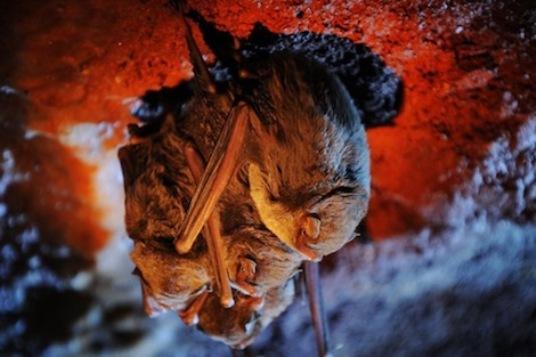 المصريون يطلبون الثراء السريع في أَعْشاش الخفاش