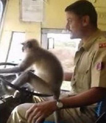 سائق حافلة يترك عجلة القيادة لقرد في الهند