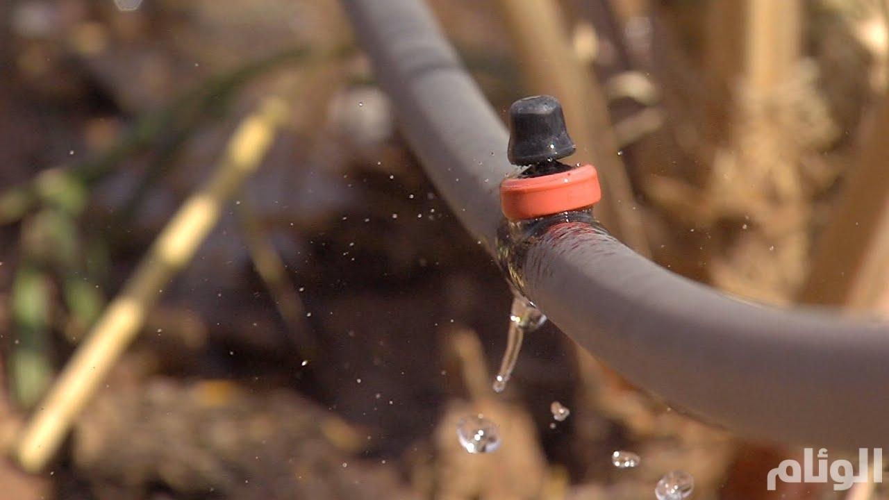 الغارديان: هكذا تستفيد السعودية من ندرة المياه بكاليفورنيا