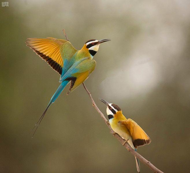 جازان موطن متميز يقصده أكثر من 70 نوع ا من الطيور المهاجرة صحيفة الوئام الالكترونية