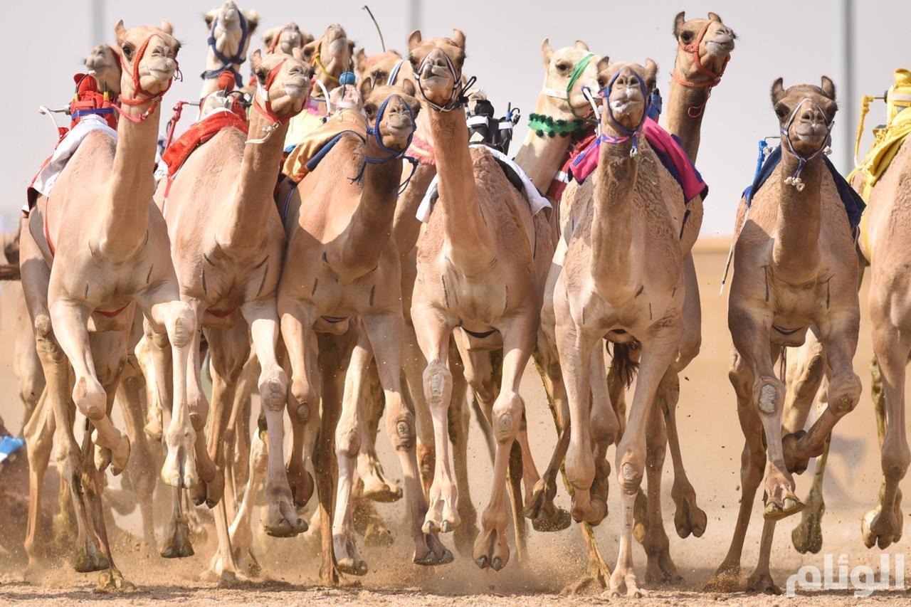 الأمير تركي بن محمد يحسم شوط الرموز الرئيسي
